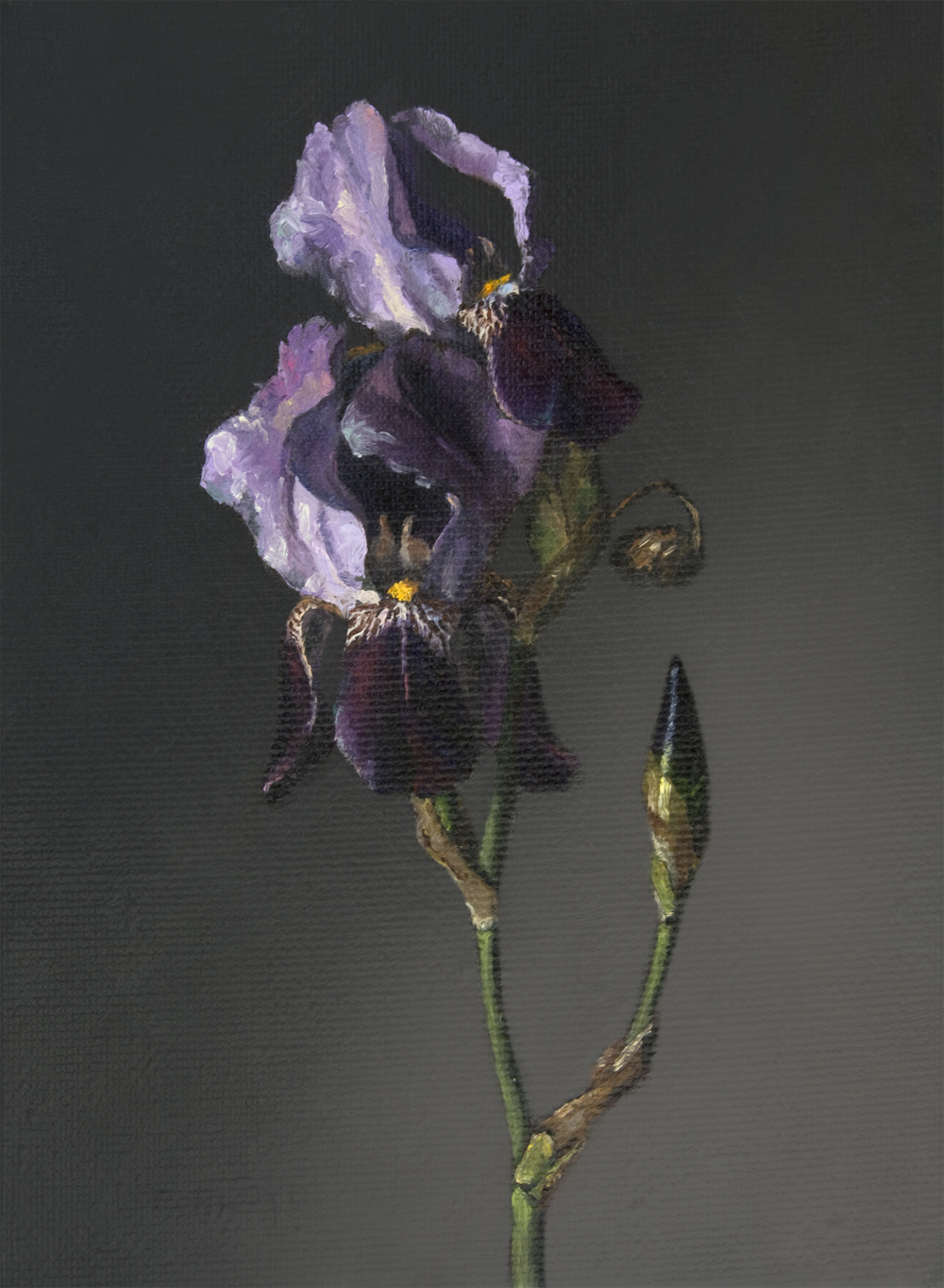 20150508-008-purple-irises-12x9.jpg
