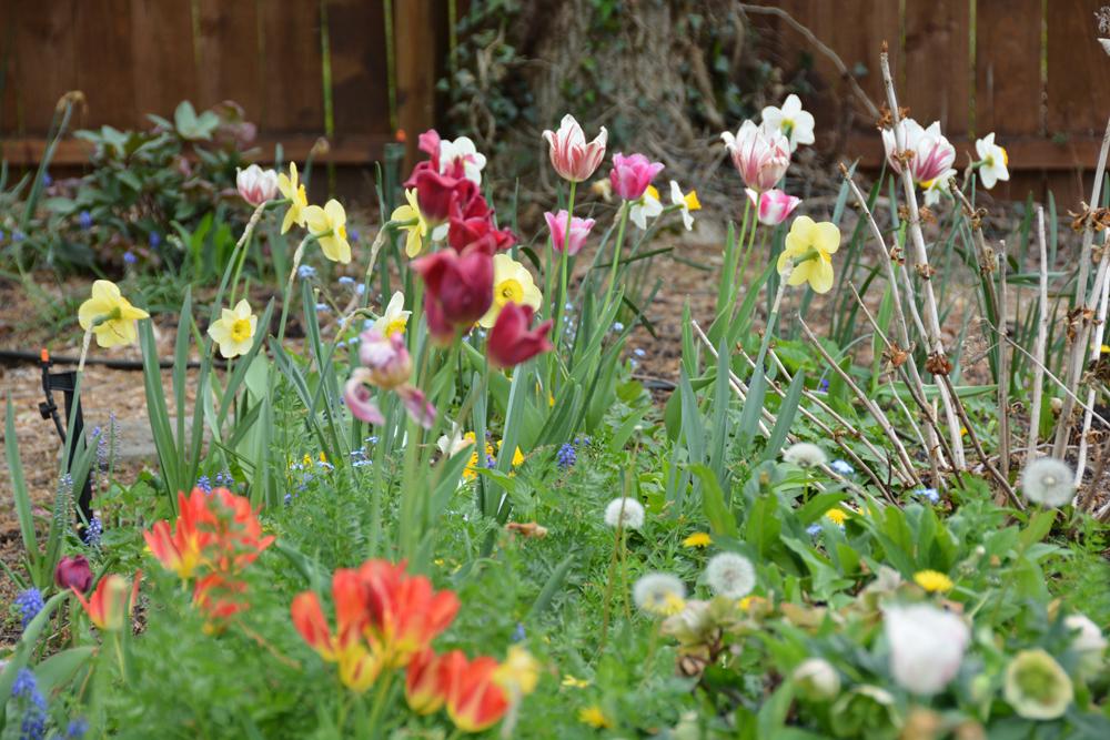 201604 - my garden 07