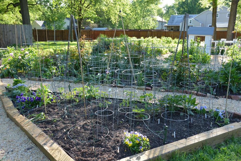 201605 - my garden 02