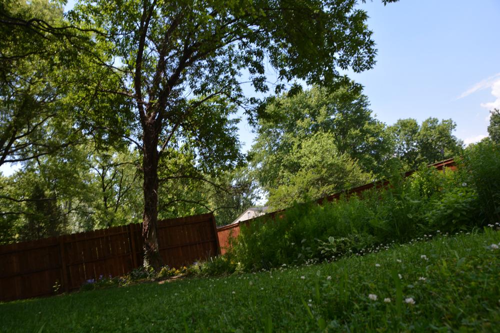 201605 - my garden by naomi 02
