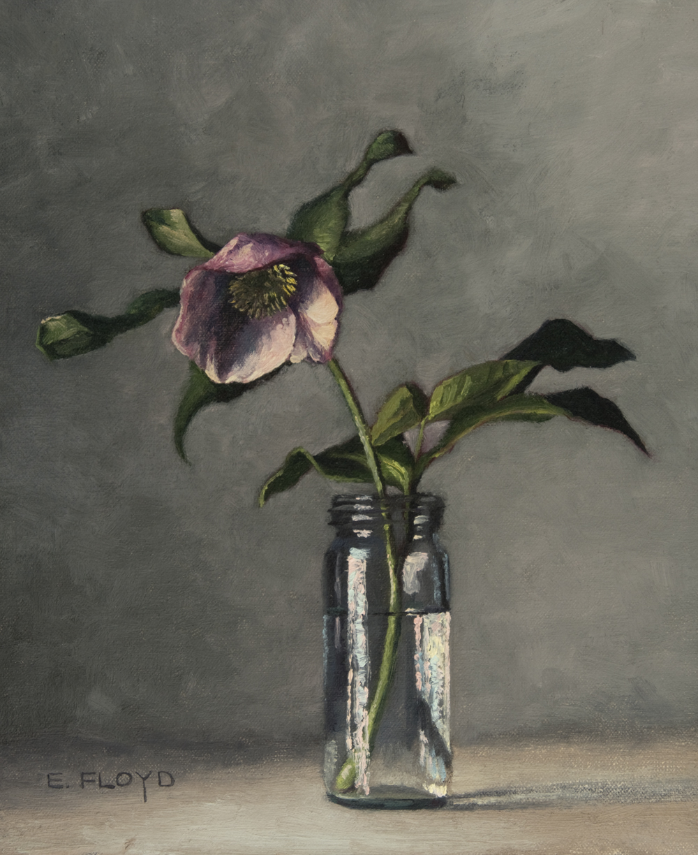 Hellebore by Elizaeth Floyd, 12 x 10 inches, oil on linen panel