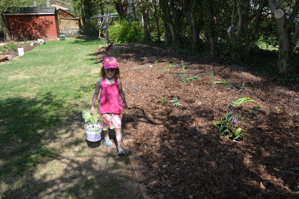 20170504-garden-update-03.jpg