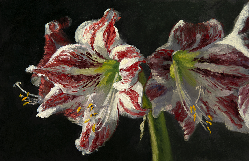 "Day 15: Oil painting of Amaryllis ""Ambiance"", 6 x 9 inches, oil on panel"