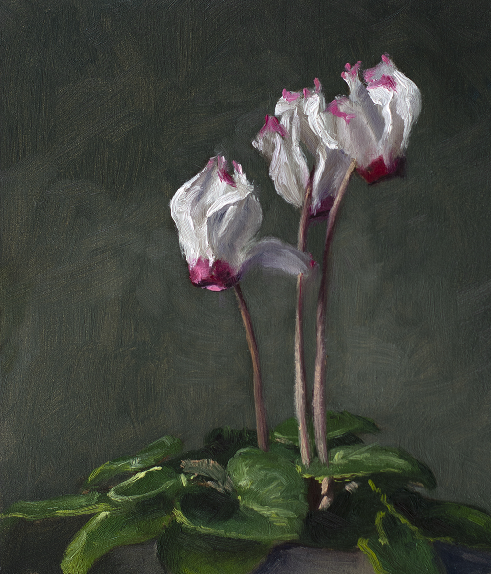Cyclamen, 6x5 inches, oil on panel, alla prima oil-sketch, unframed,  AVAILABLE