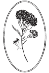 logo_achillea.png