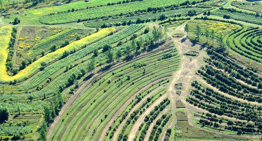 Regenerative Agroforestry Farm - Mark Shepard
