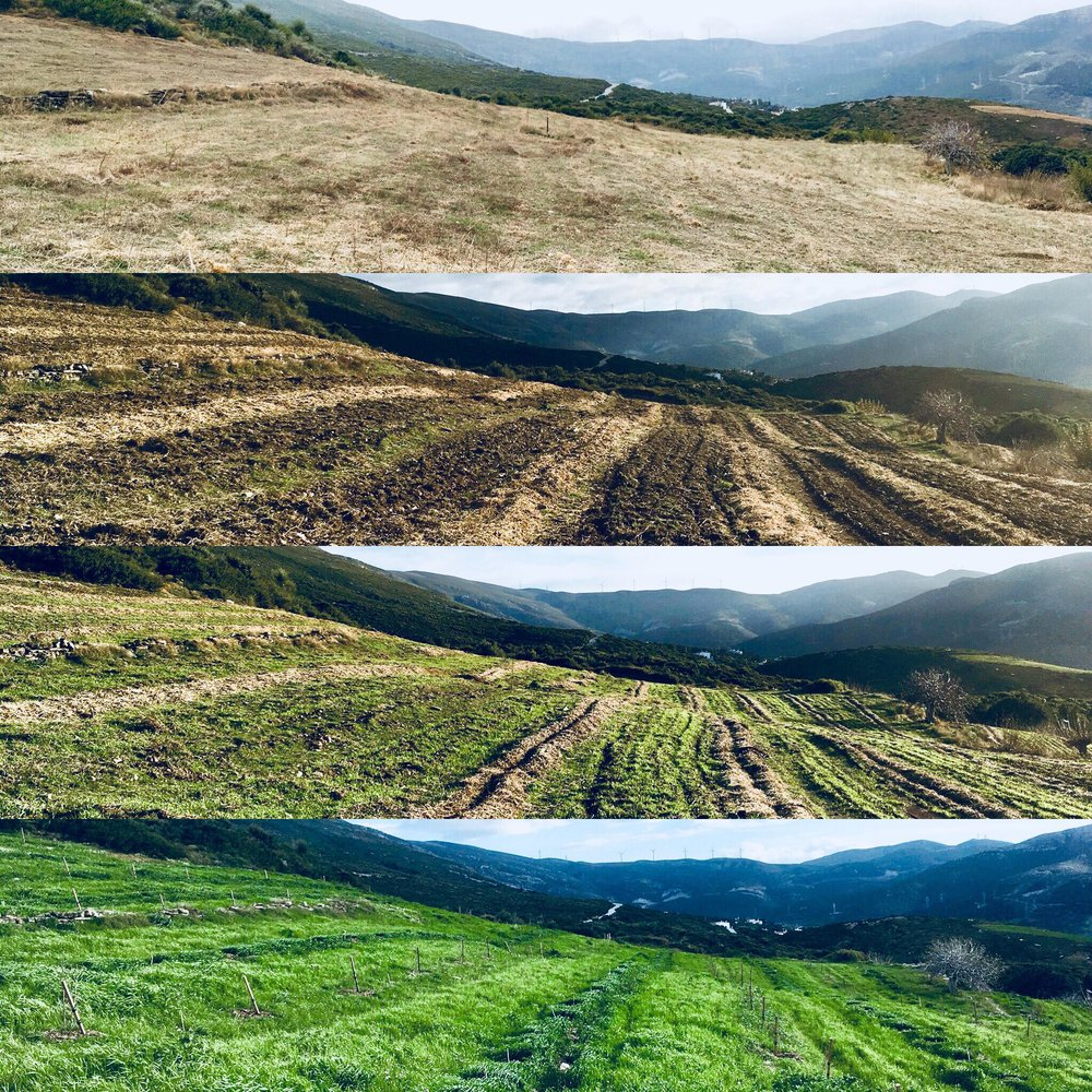 Regeneration in action: before/after sowing cover crops on Mazi Farm