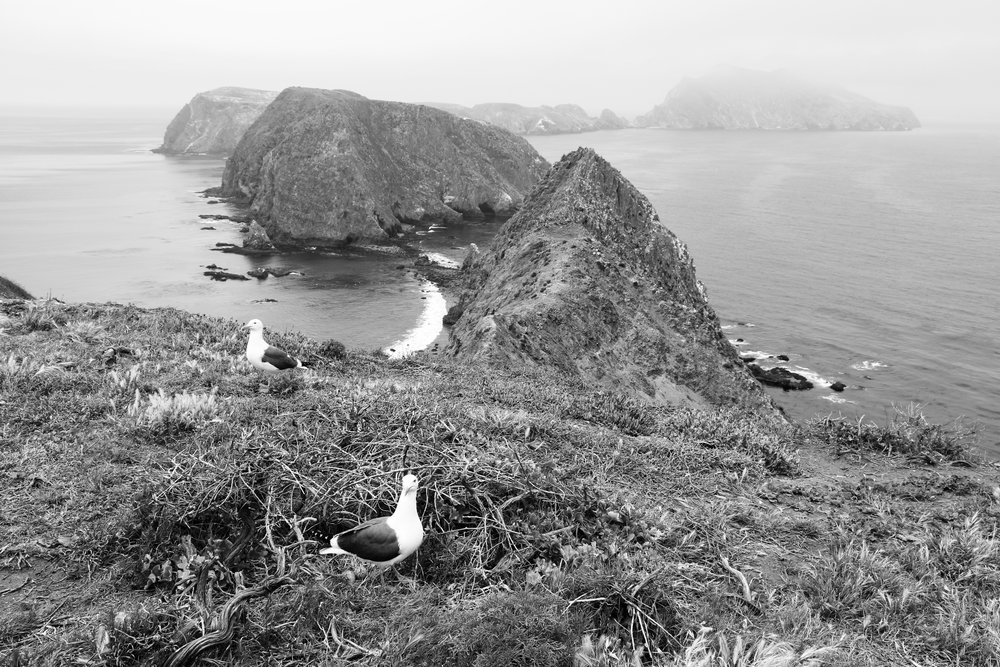 View from Inspiration Point - Anacapa Island, Channel Islands