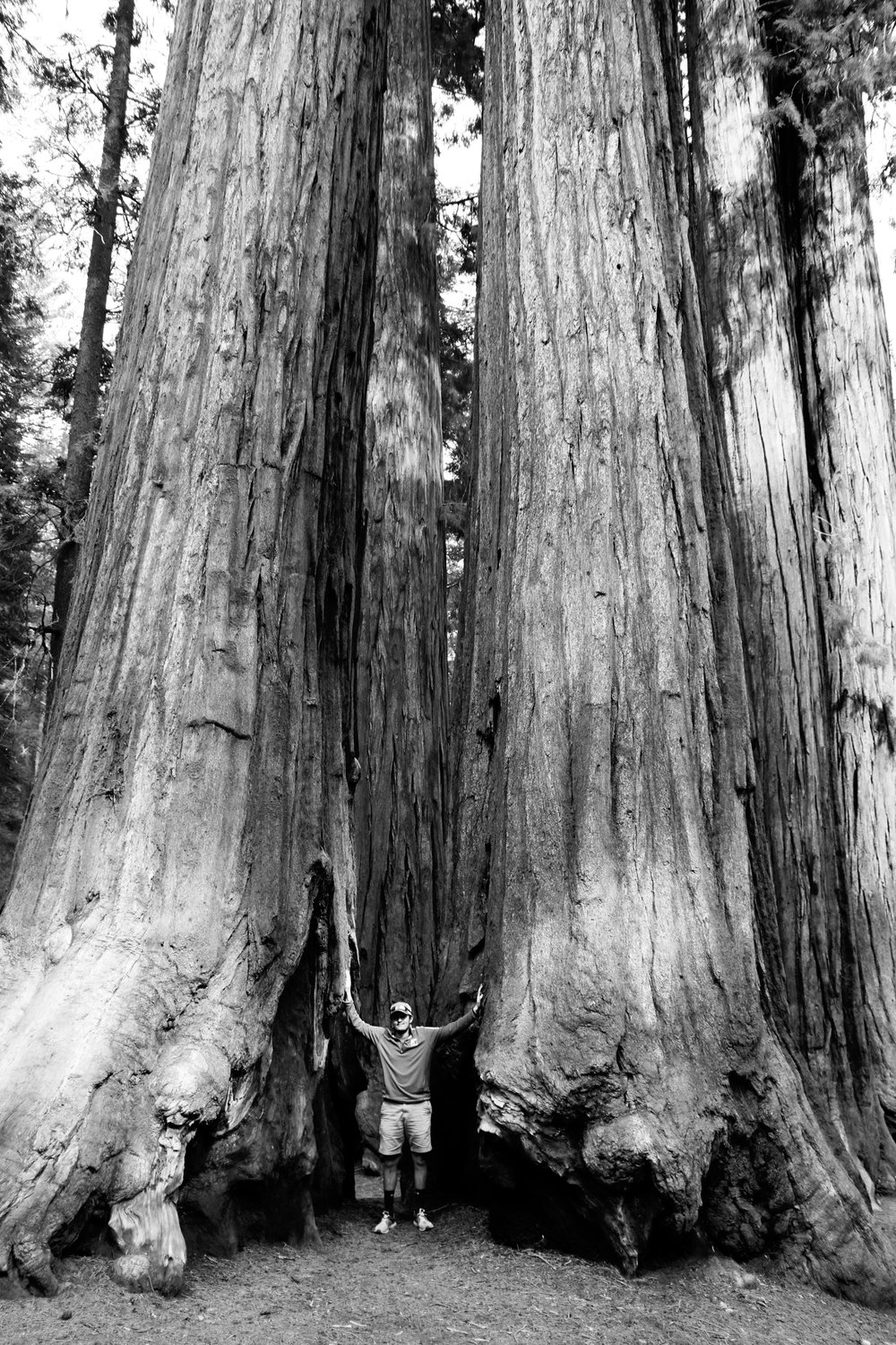 Among Giants - Sequoia
