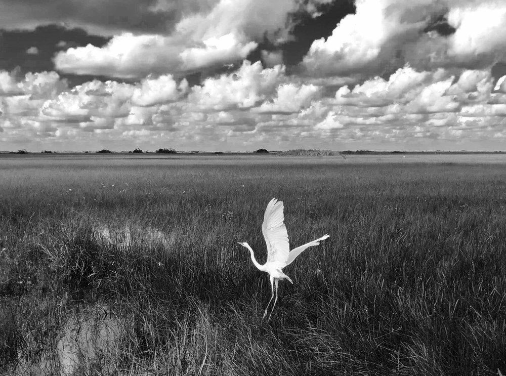 Soft Landing, Everglades