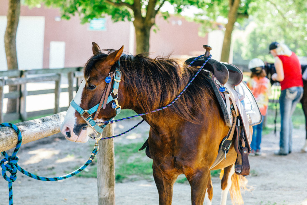Horseback-21.jpg