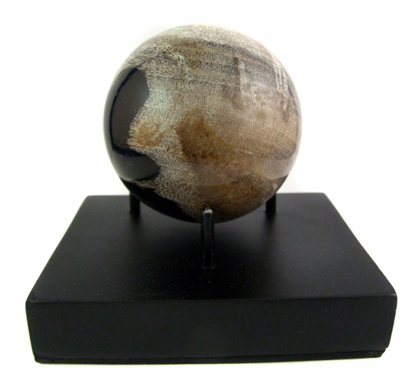 p_NS01_with_petrified_wood_sp.jpg