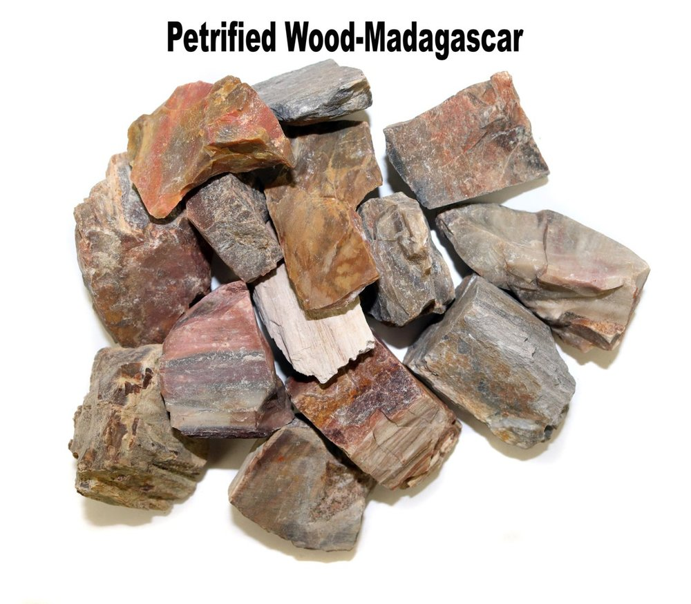 p_Petrified_Wood_1.jpg
