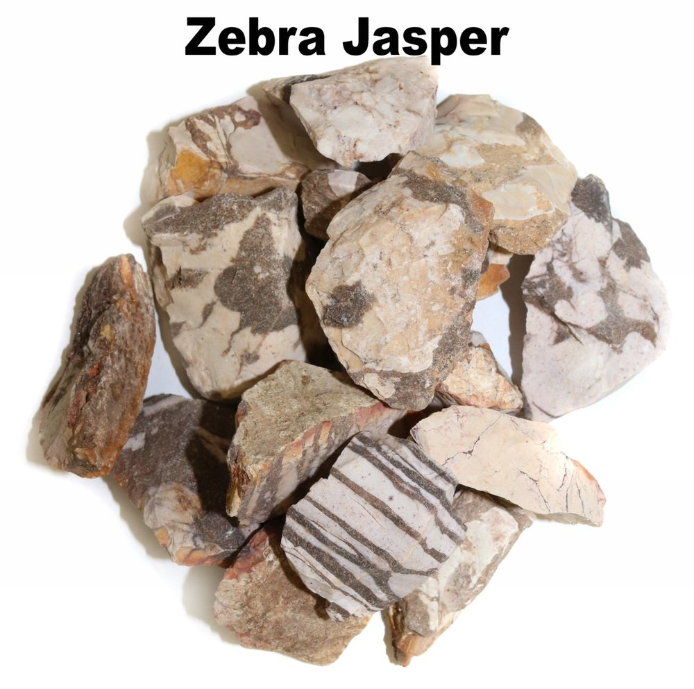 p_Zebra_Jasper_1.jpg