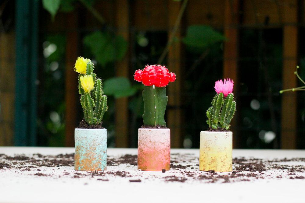 DIY Mini Planters