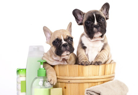 Packages best in show grooming dogg solutioingenieria Images