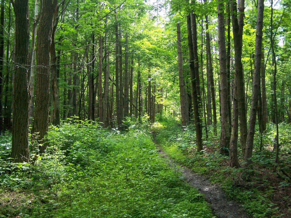 TRAILS - of the Finger Lakes National Forest