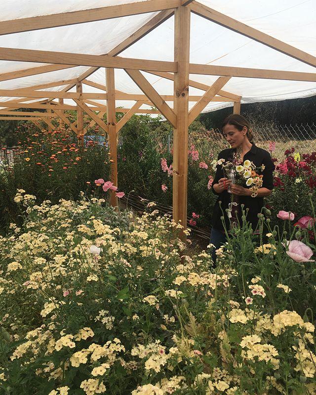 Gracias Gaby por invitarme esta mañana a tu hermoso jardín!! Te felicito por lo que has logrado con tanta dedicación, siempre aprendo muchísimo de ti, mil gracias! 💜@lamusadelasflores