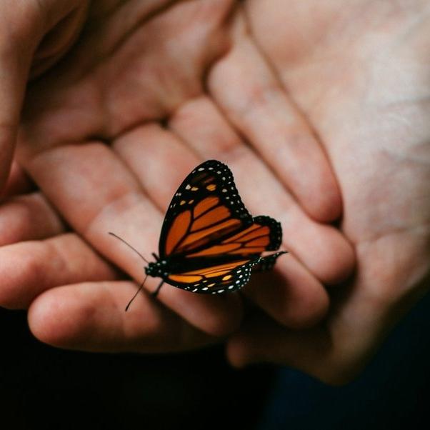butterfly hands.jpg
