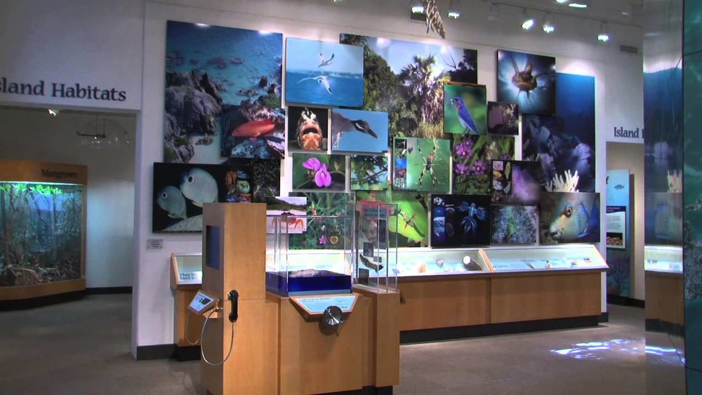 The Natural History Museum at the Bermuda Aquarium Museum and Zoo.