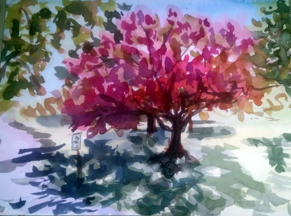 cherry blossom time - Mary Axelson9 x 11    Watercolor on paper
