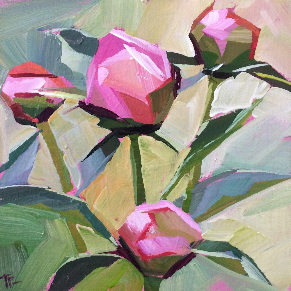 Peony buds - Teddi Parker8 x 8  Acrylic on canvas