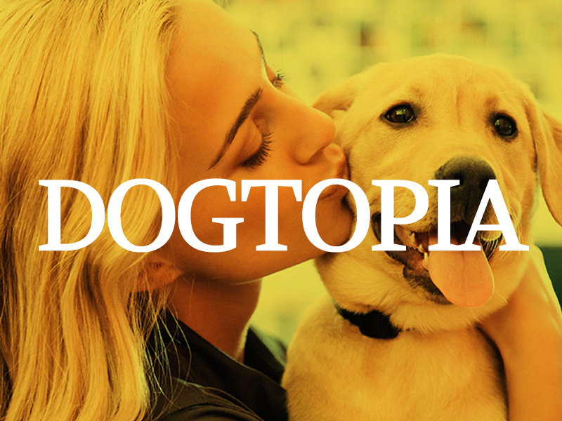 DogtopiaGallery1.jpg
