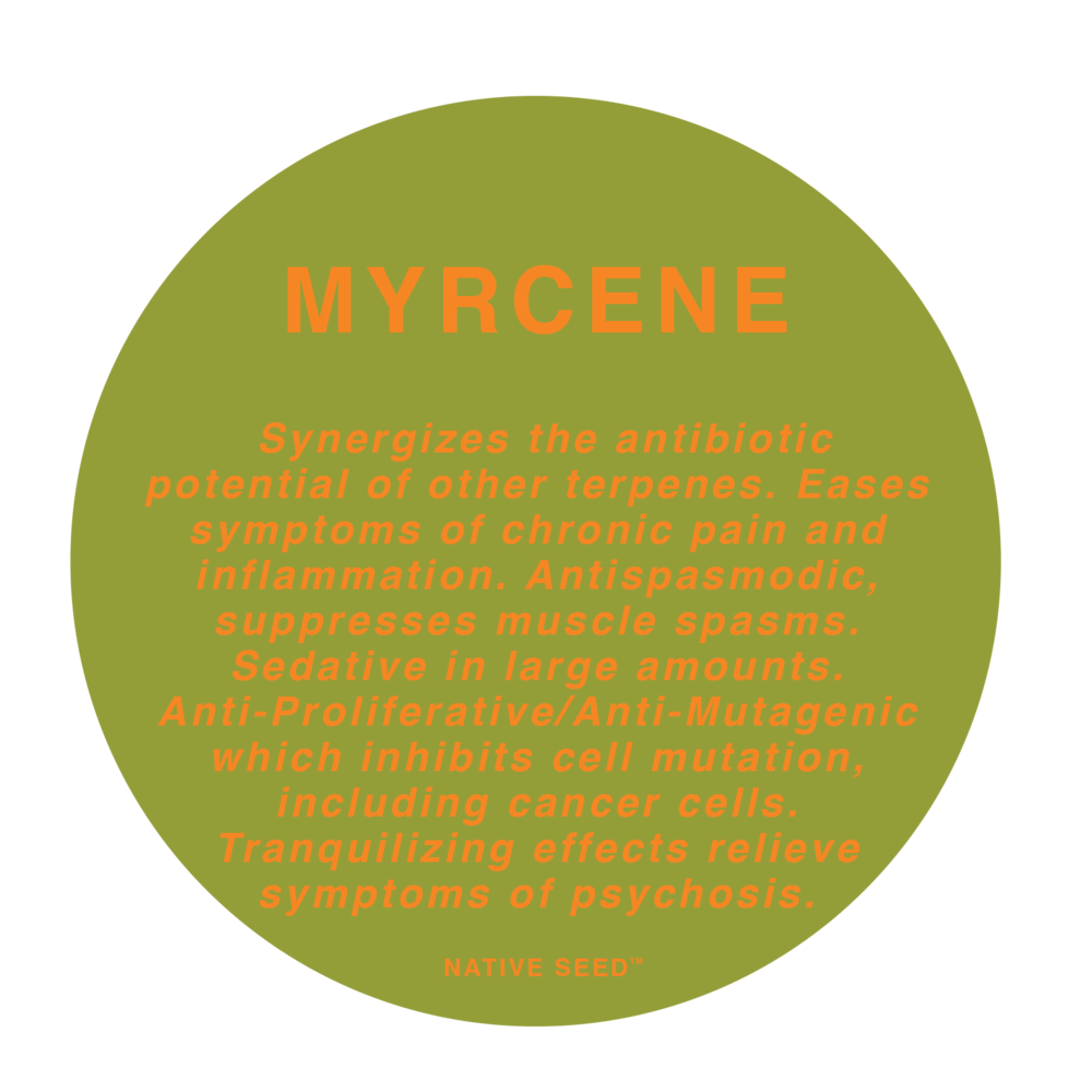 myrcene-chocolope-kush.png