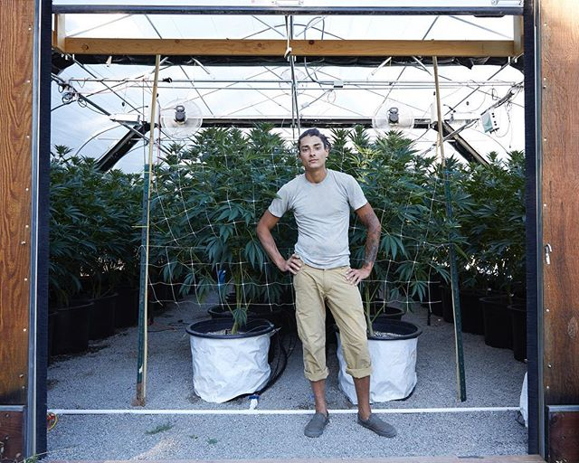 Farmer direct. @nativeseedcannabis 🌿 @westwavemedia for #nativeseed
