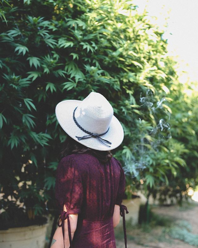 We do it for her. #cannabis #internationalwomensday #divinefeminine . . . 📷: @thiscannabislife of @ladyseedbotanicals