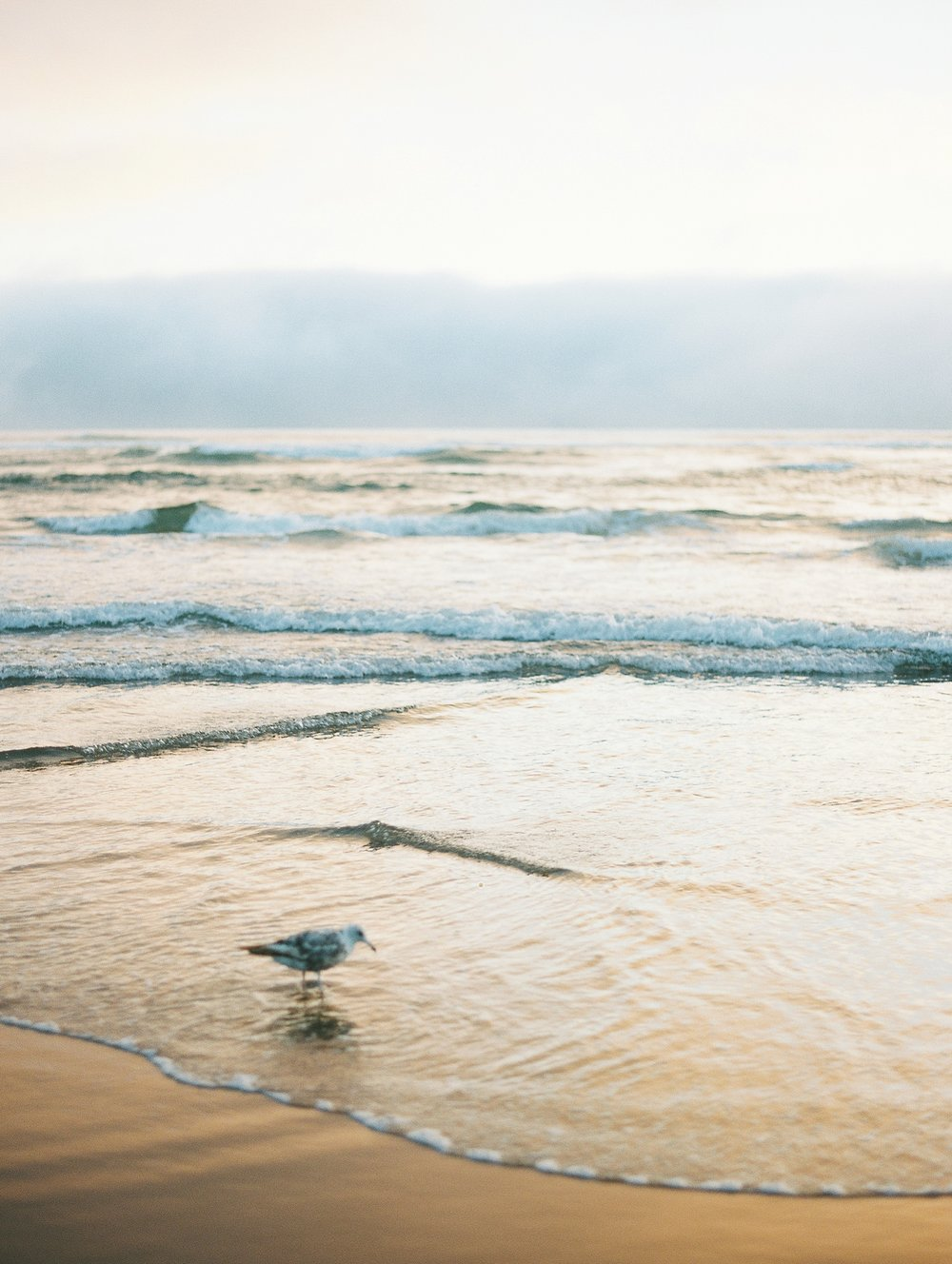 Cannon Beach Oregon Wedding Photographer_1373.jpg
