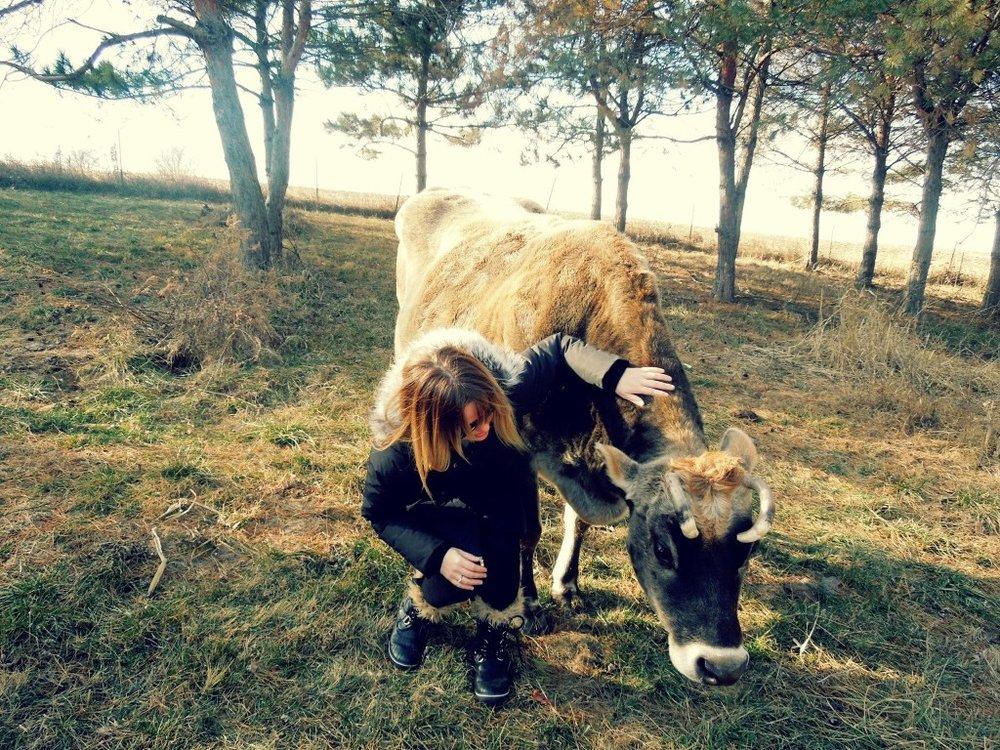 Cow-1024x768.jpg