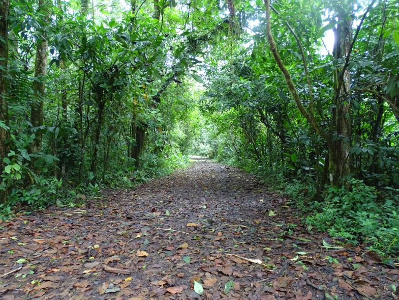 This photo was taken in OTS Nature Preserve in Sarapiqui, Costa Rica. This picture shows how beautiful and wonderful Costa Rica is. The OTS Nature Preserve was one of the places we went on a nature hike. We were surrounded by beautiful plants, animals, and insects.    Words by Leah Borrego, photo by Julie Israelson.
