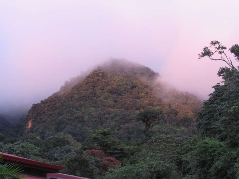 I took this picture at sunset in Monteverde. - Isabella Ledesma