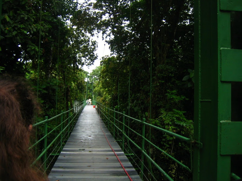 This photo was taken on a morning hike. We had to cross this bridge, which was a little scary because we were right over a big river. On this hike, we saw birds, monkeys, and turtles. It was amazing.  Words by Adriana Altamirano, photo by Lucille Glassman.