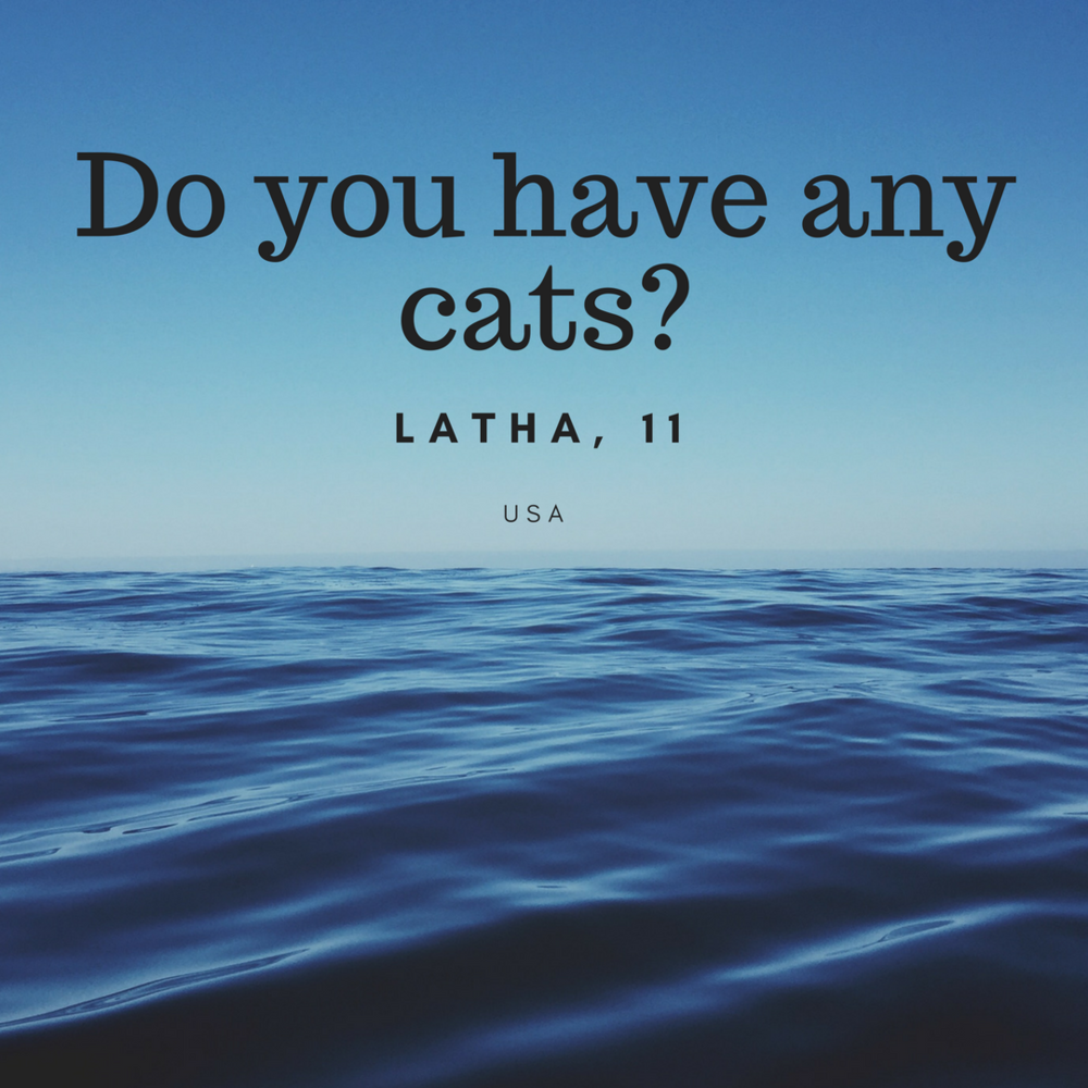 Do you have any cats-.png