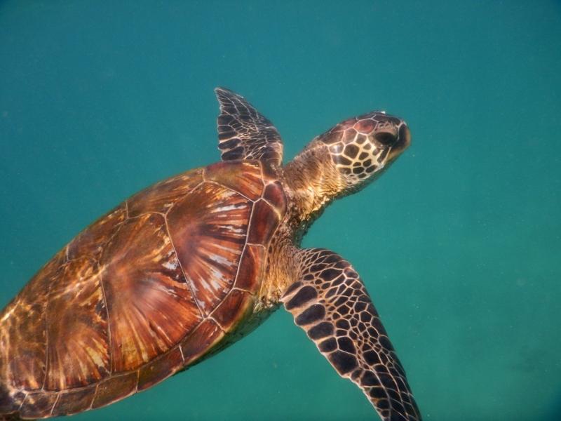 Turtle 4-3.jpg