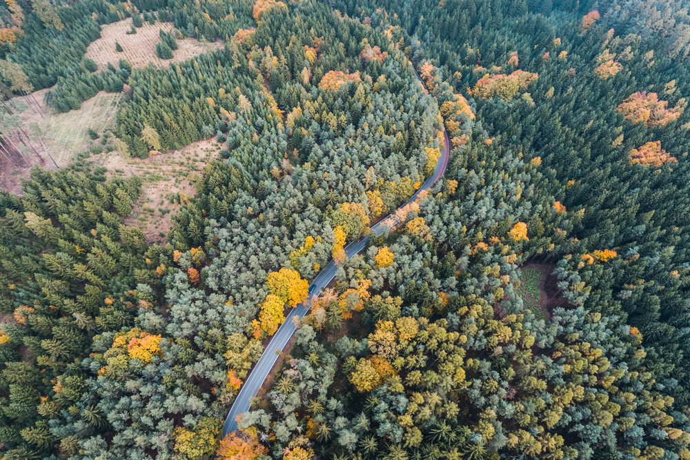 lonely-road-in-forest-aerial-view-picjumbo-com.jpg