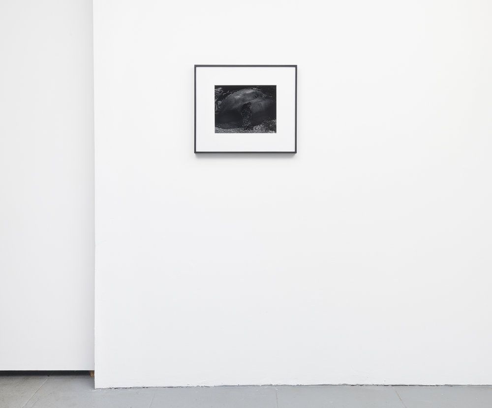 Installation View.  Flesh,  10.25 x 13.25,selenium toned, silver gelatin print in 8 ply over-mat (18 x 21),painted wood frame, 2018