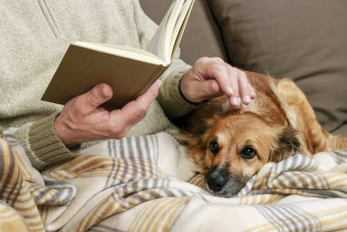 Old man sitting on the sofa with his lovely dog and book