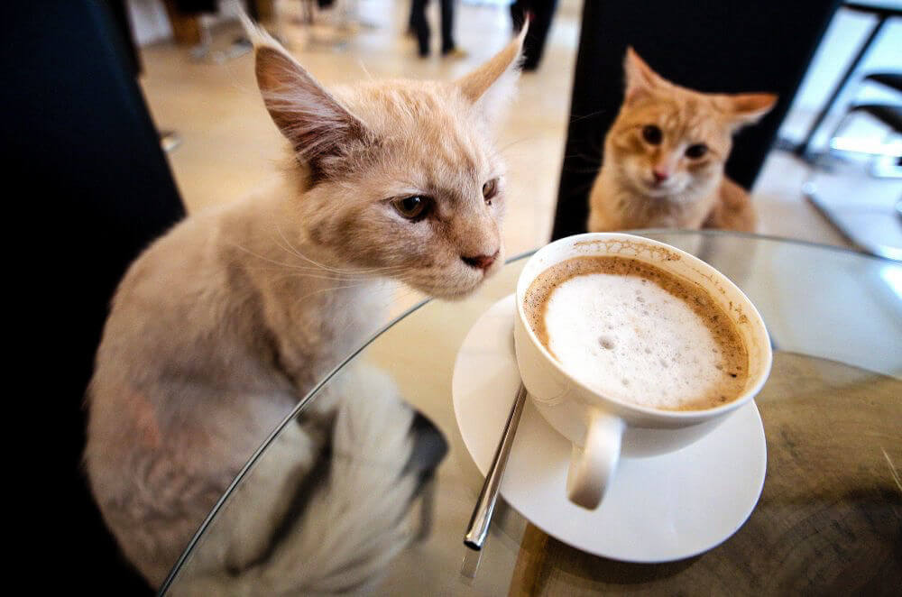 1_Cat-Cafe_The-Plaid-Zebrajpg_wiidpu.jpg