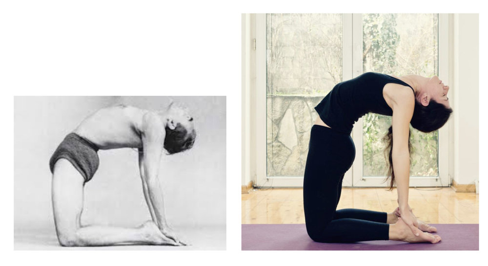 BKS Iyengar in  Ustrasana . Notice the short sharp arch at the base of his spine, and the spinal column extending in a straight line. From this basic alignment, the relaxation of the pose follows. In modern posture, the hinge at the natural arch is gone, and instead it moves to the mid and upper back. The result is tension rather than relaxation.