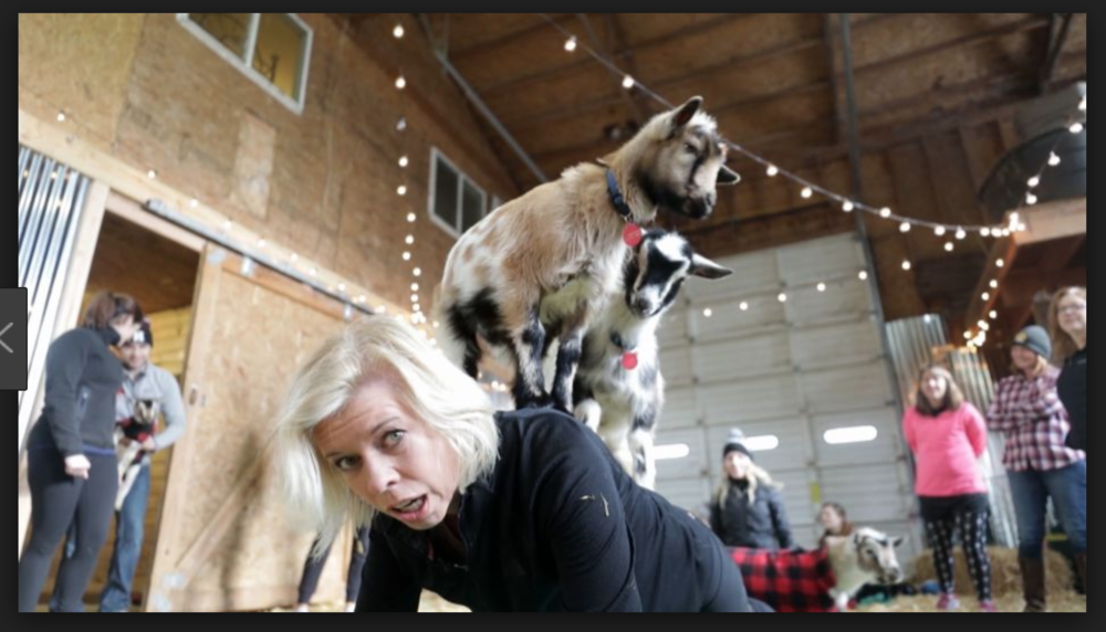Goat yoga: yes, it's a thing.
