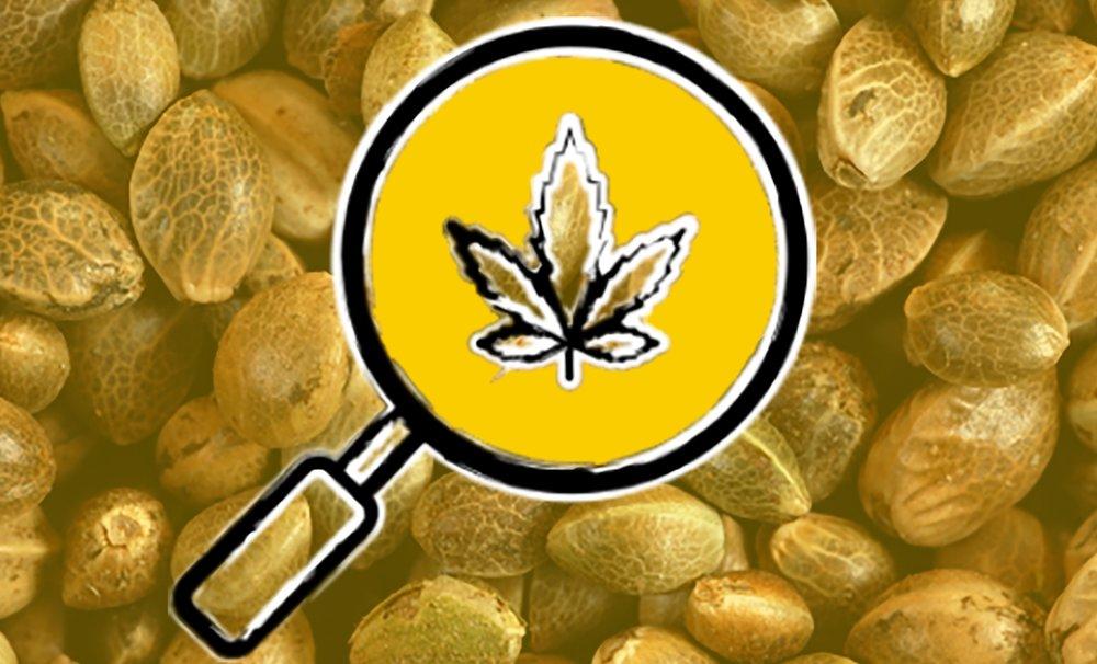 marijuana seeds seed-to-sale