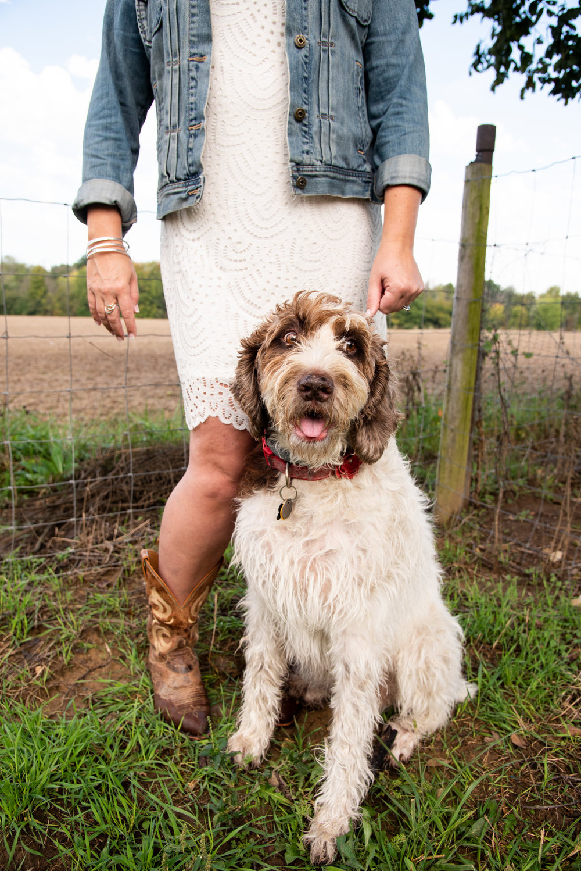 engagement photographer dog and pet photographer engagement photos with dog