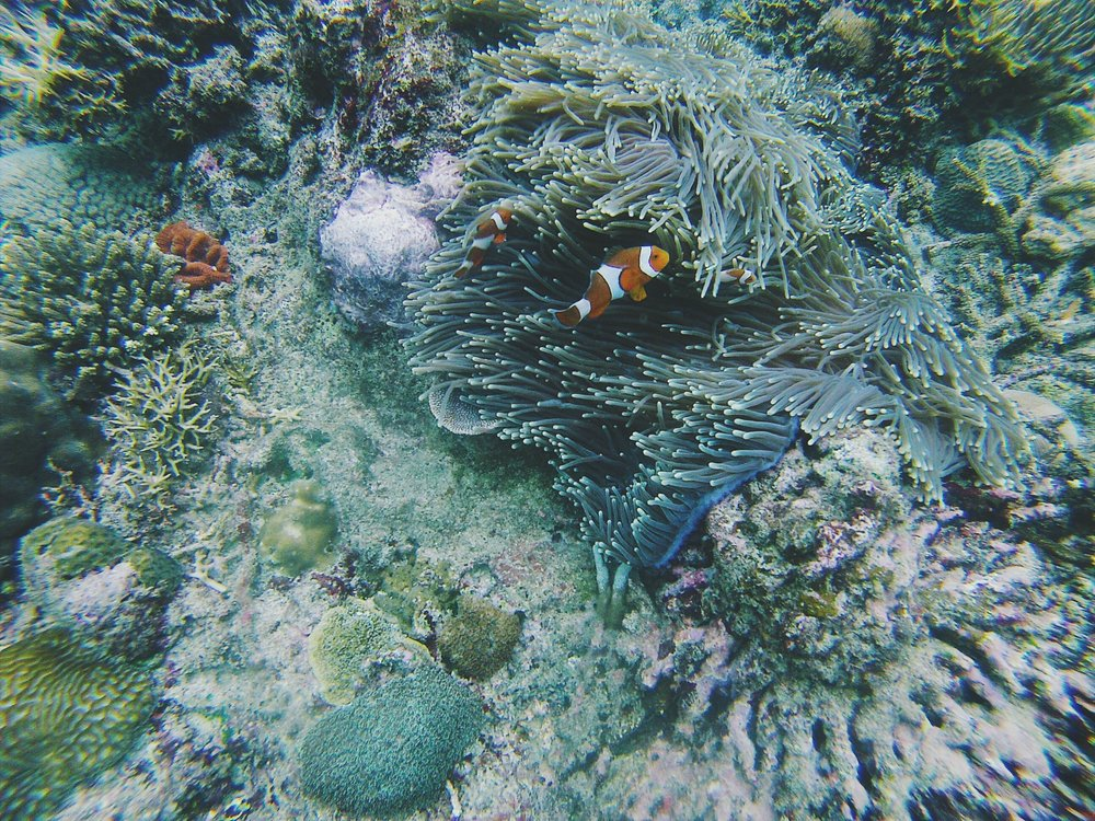 We found Nemo and his family in the reefs of Cuayan