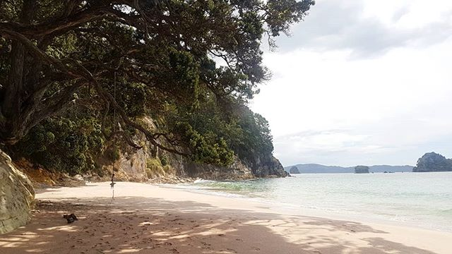 Life's a beach 🏖 . A beach with pink sand and aquamarine water ✌🏽 . #sail #sailing #sailboat #sailingboat #sailingyachts #sailtheworld #sailingtheworld #sailor #sailorlife #travel #traveltheworld #travelgram #instatravel #beach #beachlife #newzealand #tedsetssail #tedadventures #hahaeibeach