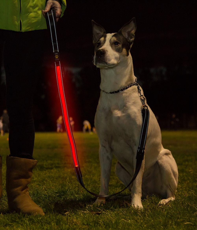 dog red leash glow.jpg