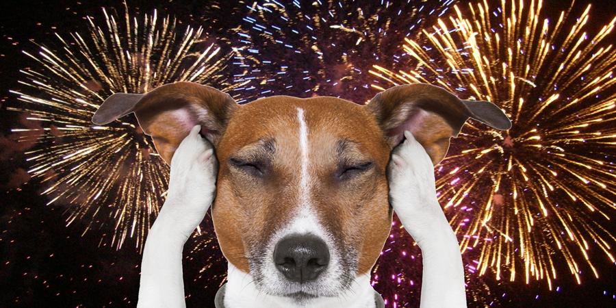 dog-fireworks.png