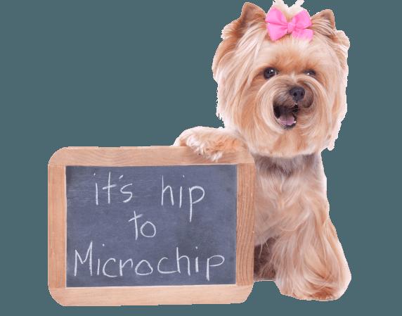 Hiptochip.png
